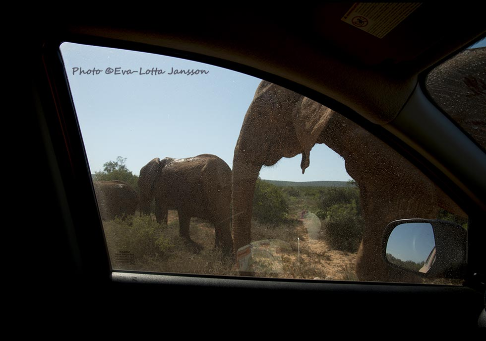 Visual storytelling from the southern tip of Africa