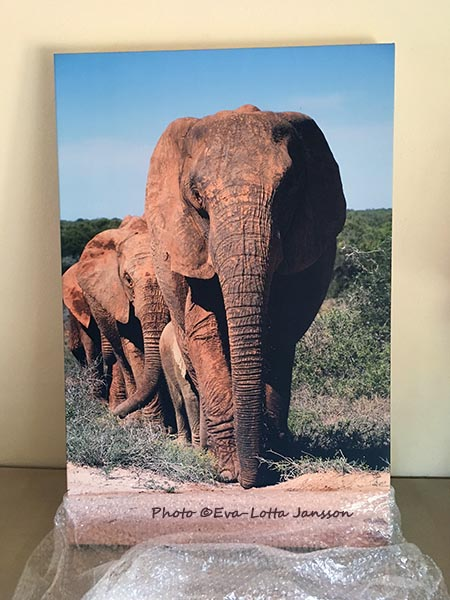 Limited Edition Elephant Print © Eva-Lotta Jansson